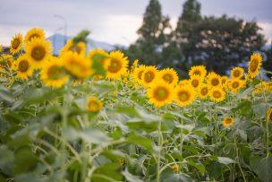 夏のギフト イメージ